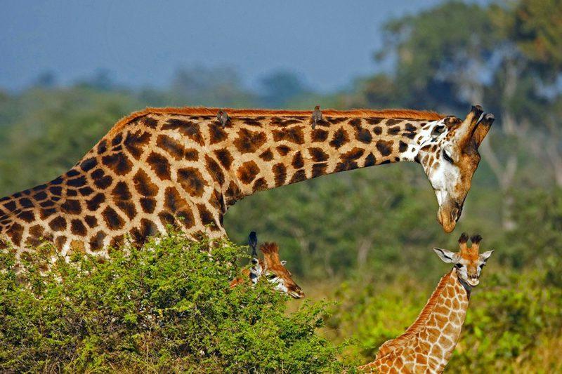 Sudafrica Parque Nacional Kruger